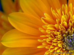 Macro view of Yellow flower - photo by Irina Wardas