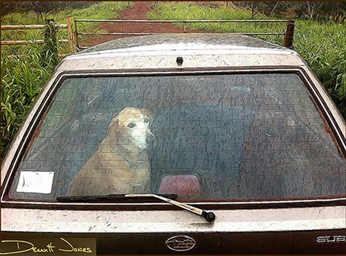 Dog in car photo by Dewitt Jones