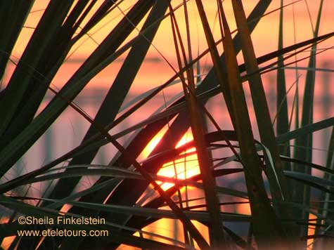 Sunset Through the reeds at Wakodahatchee Wetlands